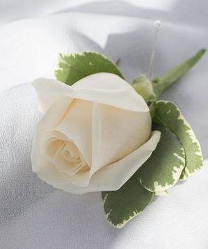 ivory rose boutonniere - Garden Rose Boutonniere