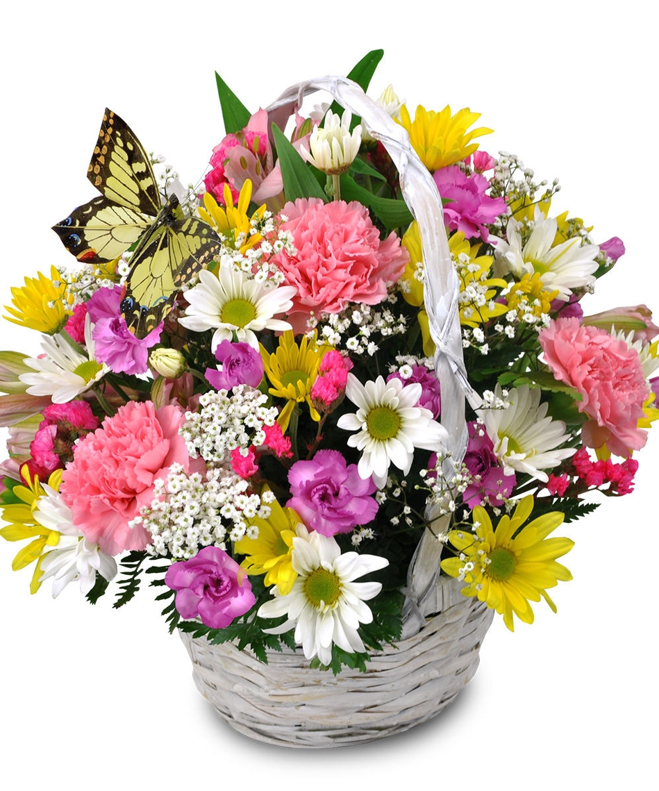 Flower Baskets Delivery : Sweet butterfly basket river dell flowers oradell